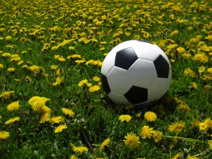 dandelions-and-soccer-ball-1330576-m