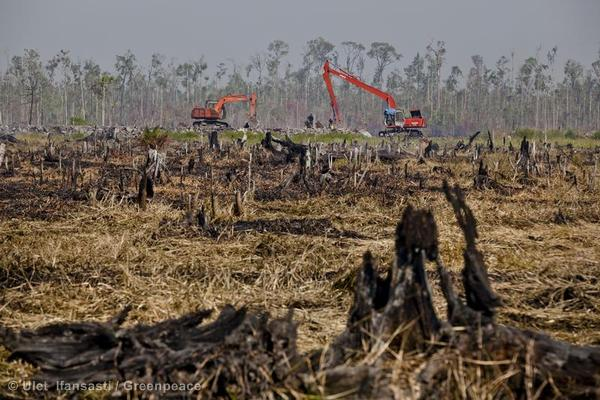Excavators continue building a peatland drainage canal on the border between remaining rainforest and the charred stumps from fires on recently cleared peatland in the PT Rokan Adiraya Plantation palm oil plantation near Sontang village in Rokan Hulu, Riau, Sumatra. © Greenpeace