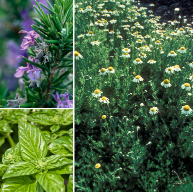 Study Blend - aromatherapy oil