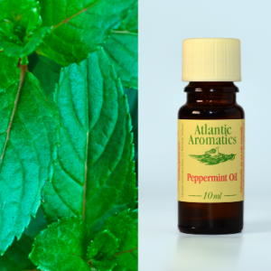 Peppermint oil - organic (10ml)